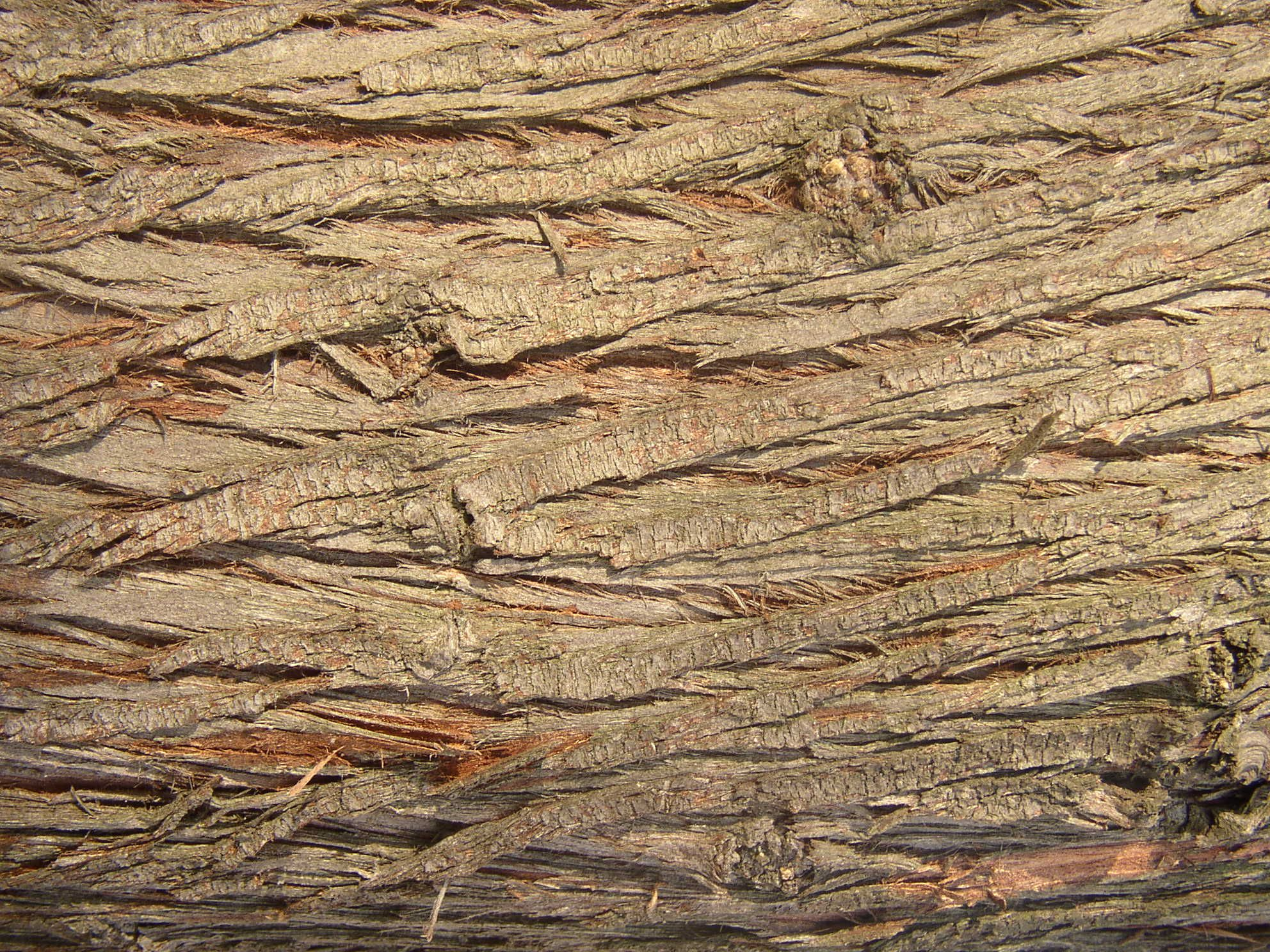 Free Wood texture   Rough wood. Free Wood texture   Rough wood   Textures   Pinterest   Free wood