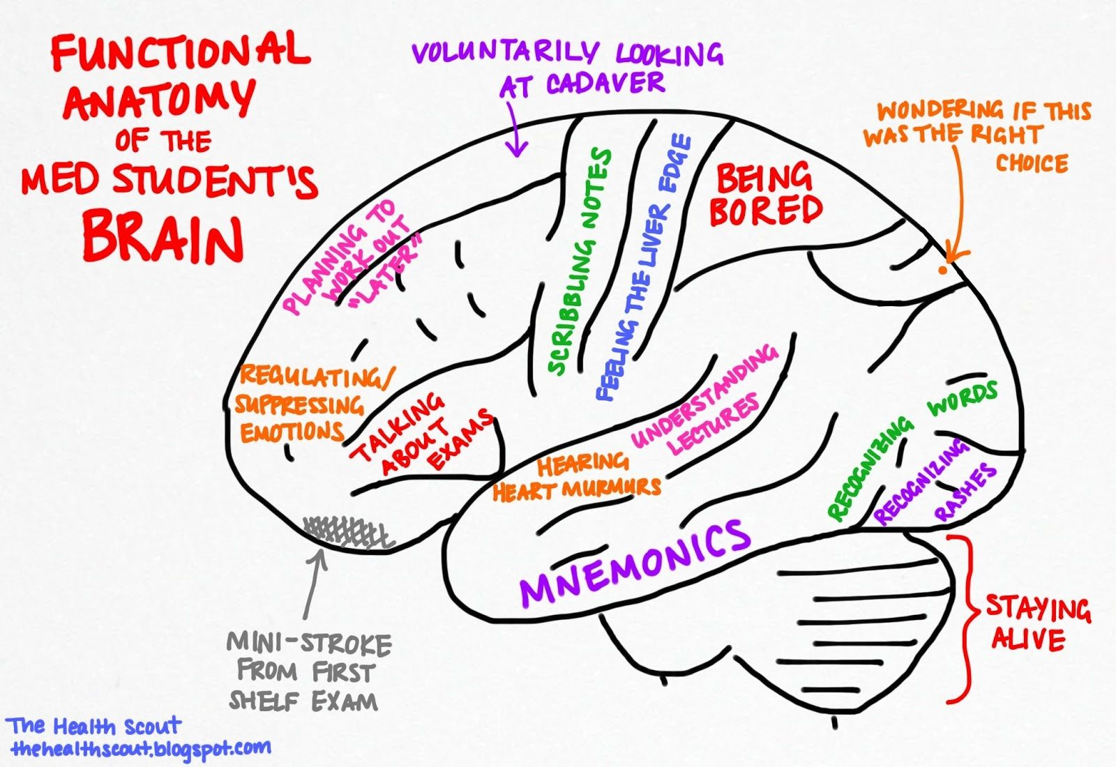 Functional Anatomy of a the Student\'s Brain via The Almost Doctor\'s ...