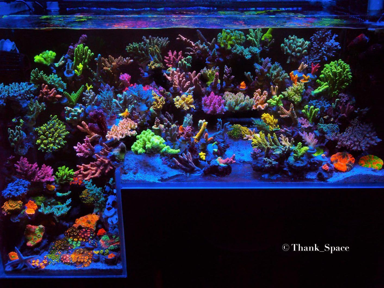 10 Topnotch Tanks That You Wish You Had Orphek Reef Led Lights In 2020 Led Lights Led Lighting Solutions Led Aquarium Lighting