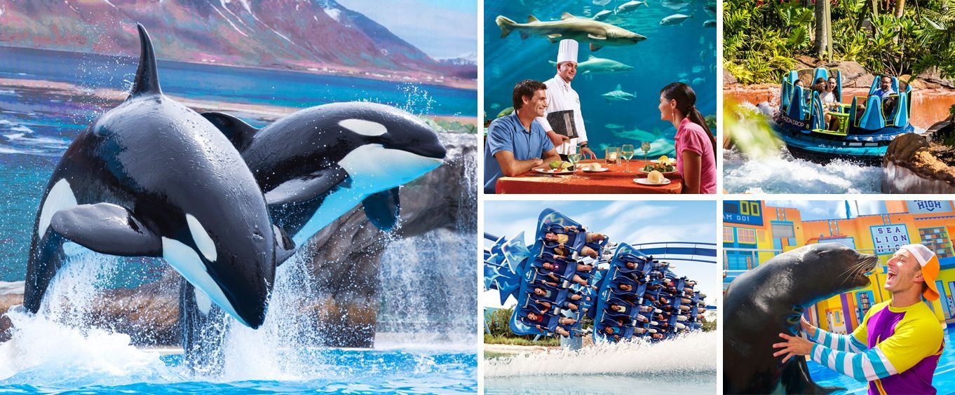 Get Your Tickets Now 2 Busch Gardens Tickets Only 25 Each This Promotion Is For Florida And Non Orlando Theme Park Tickets Busch Gardens Tampa Busch Gardens