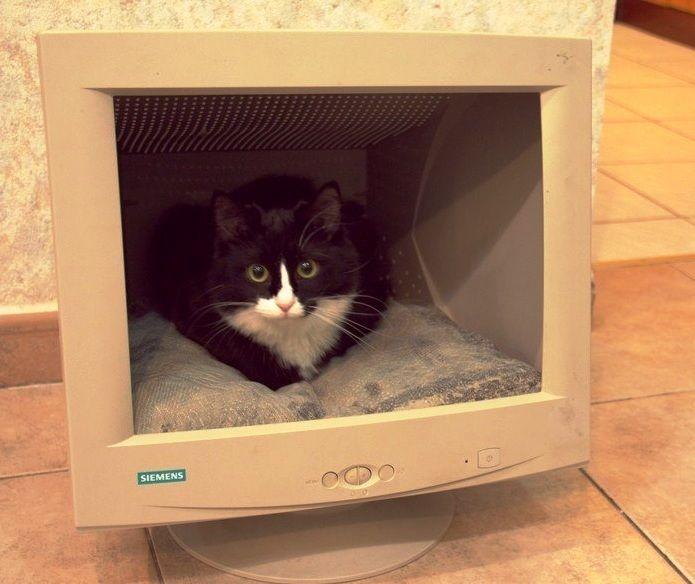 Cama para gatos con material reciclable buscar con - Cama para gato ...