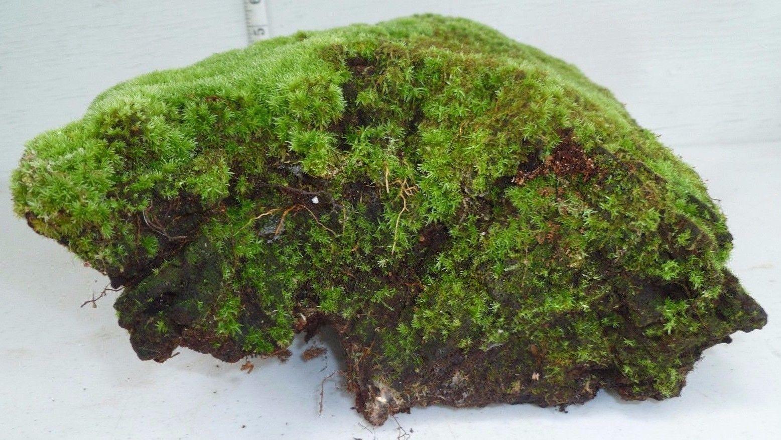 Large terrarium tank reptile pinterest large terrarium fish
