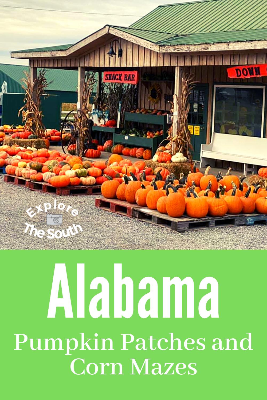 Alabama Pumpkin Patches Corn Mazes To Visit In 2020 Pumpkin Patch Pumpkin Patch Corn Maze Alabama