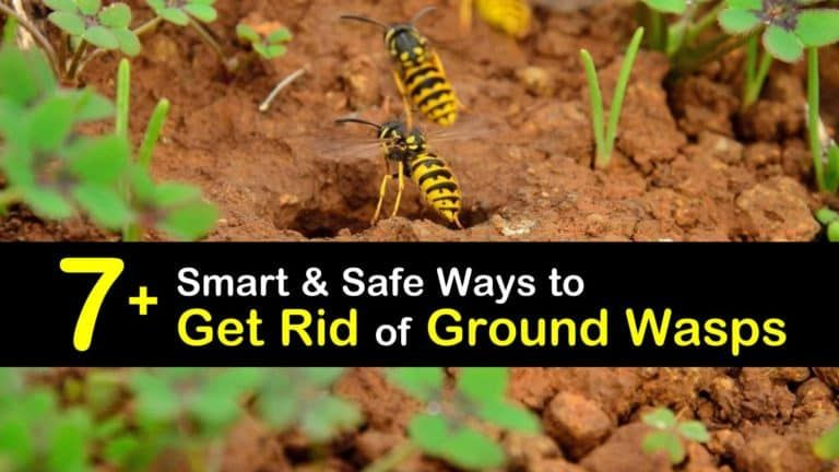 how to remove bees nest in the ground