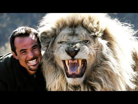 Wild discovery channel animals - My Lion Family Kevin Richardson HD - An..
