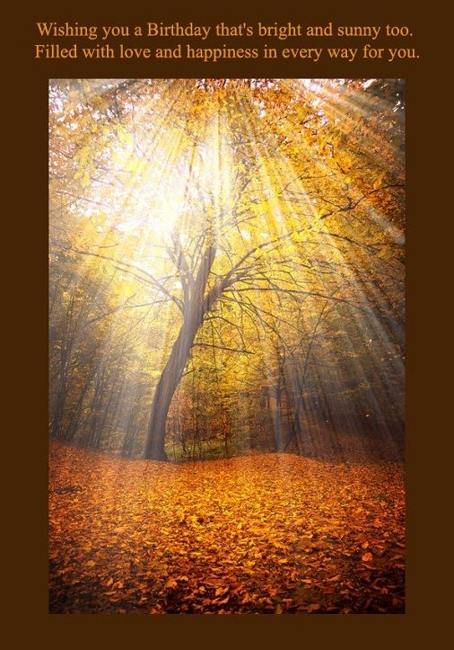 Birthday Card With Sunny Autumn Forest Nature Photography Nature Beautiful Nature