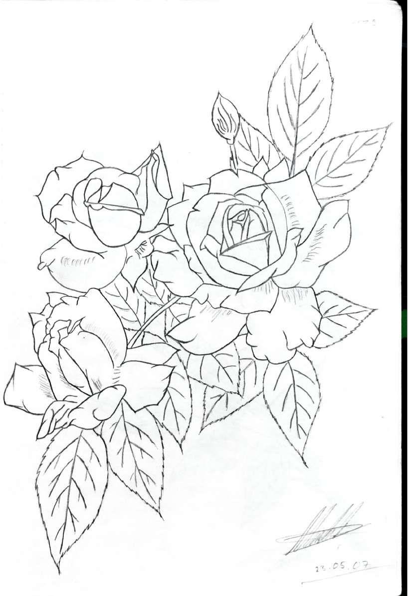 Rosenzweig Ausmalbilder Blumenzeichnung Malvorlagen Blumen