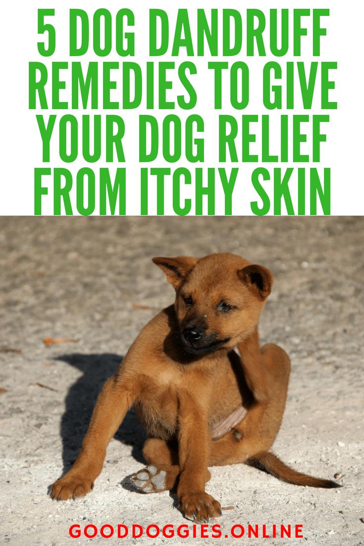 Dog Dandruff Remedies Dog Dandruff Dandruff Remedy Itchy Dog Skin