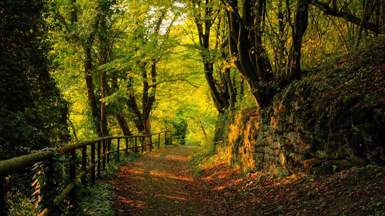 Fotos Paisaje Windows Buscar Con Google Scenic Wallpaper Forest Road Forest View