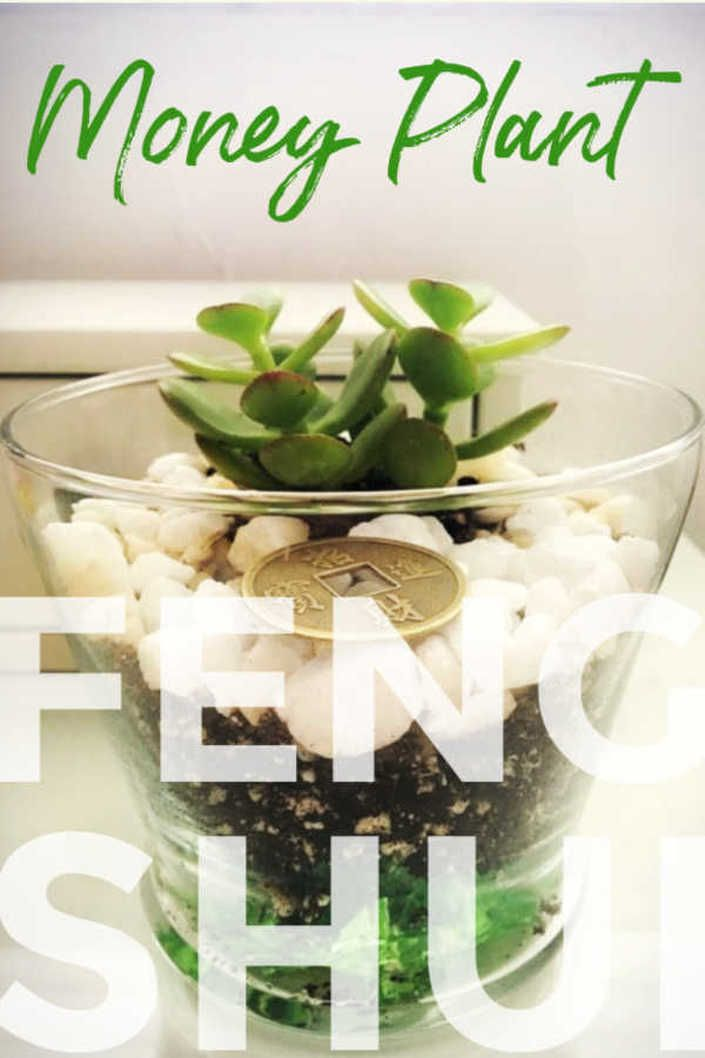 why jade is the feng shui money plant read more fengshui
