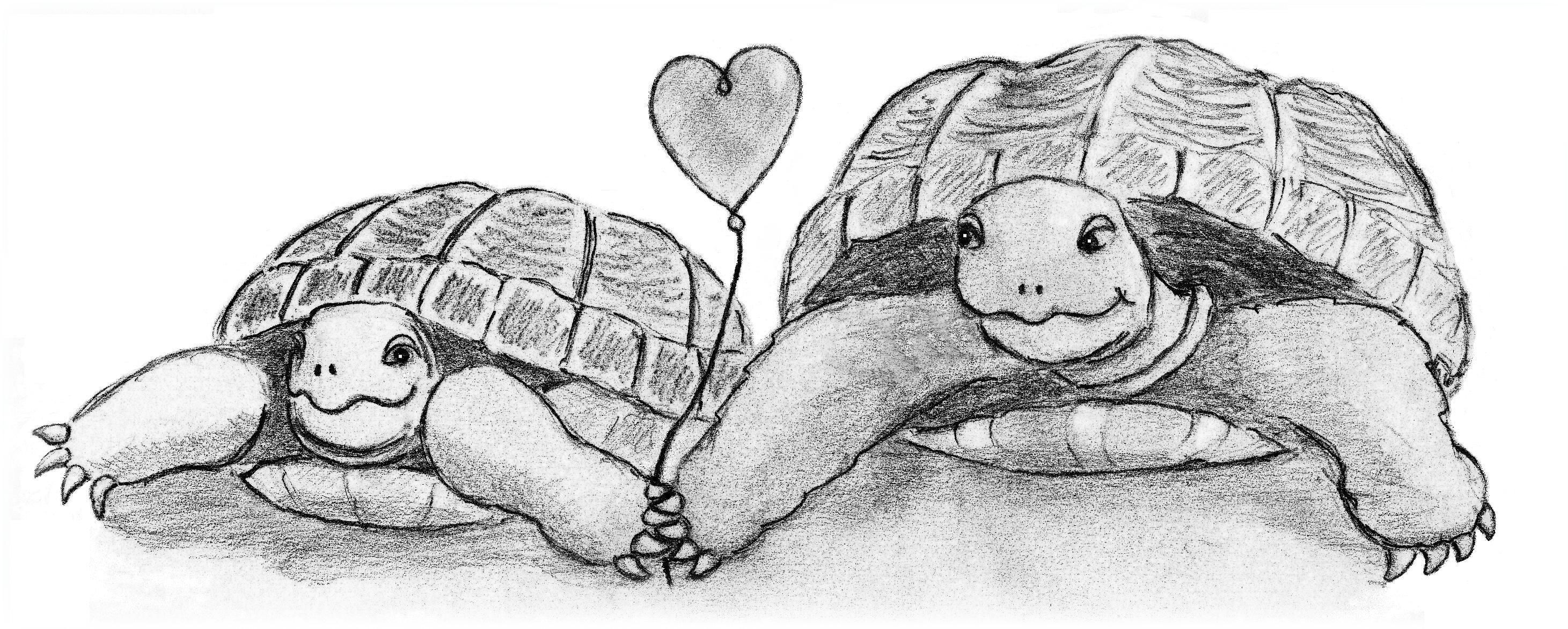 Boris En Montana Zijn Verliefd Schildpad Tekening Schildpad Tekenen