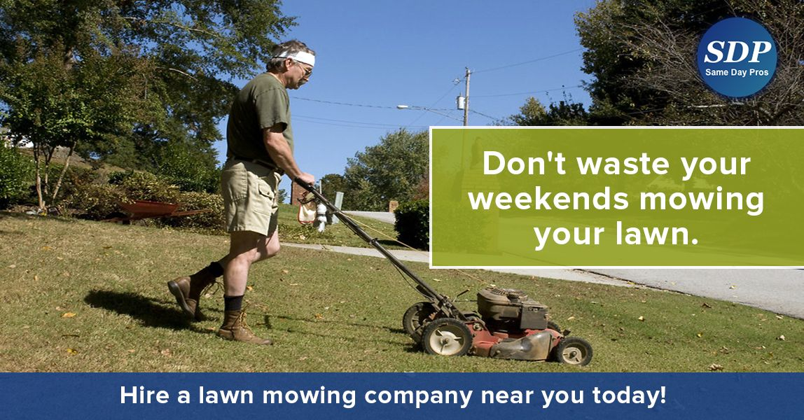Professional Lawn Care Or Lawn Mowing Companies Lawn Care Lawn Mower Lawn Care Companies