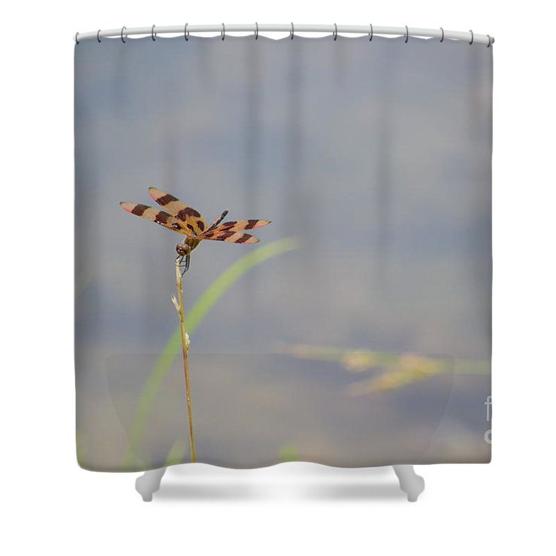 Dragon Shower Curtain featuring the photograph Dragon Fly 4 by Scott Hervieux