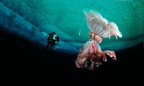 Лечение суставов медузами болят суставы в ногах какой мазью мазать