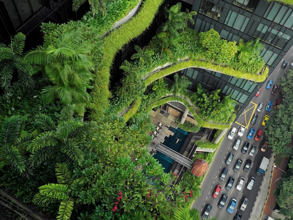 Picture of a woman swimming in the pool of a greenery-covered hotel in Singapore