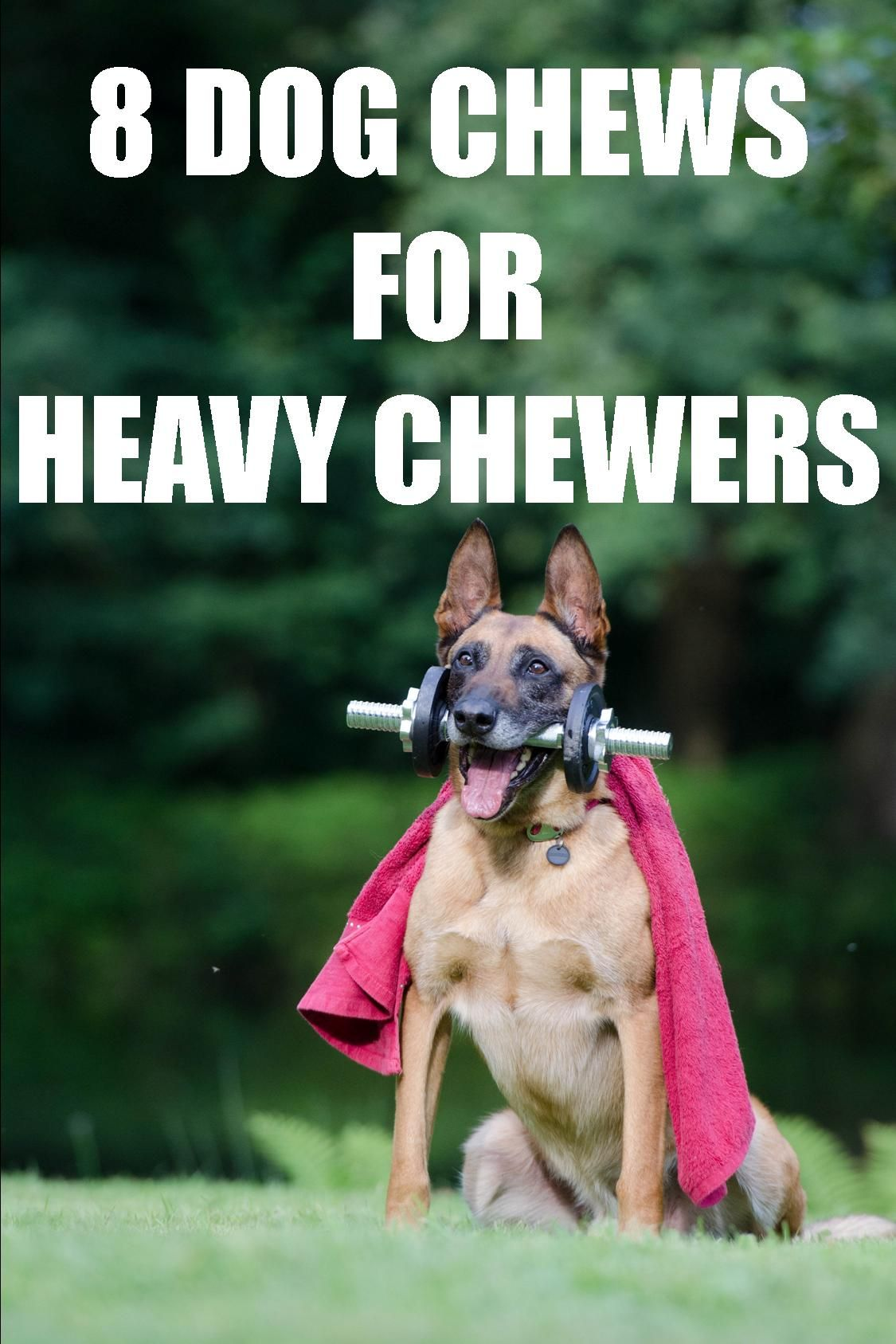 8 Best Dog Chews For Heavy Chewers #dentalcare