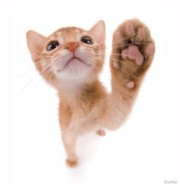 cat litter sifter