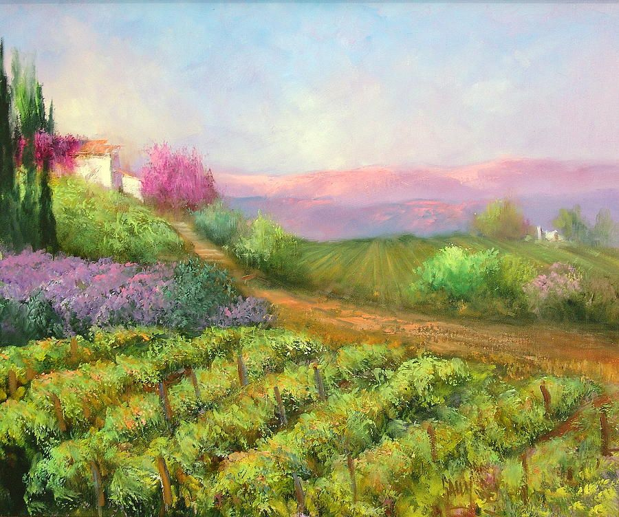 Vineyard Spring By Sally Seago Vineyard Landscape