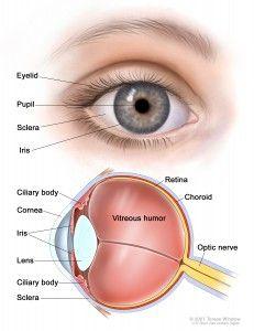 04250ff128d4d Como funciona o Olho Humano  - HOB - Hospital de Olhos de Blumenau