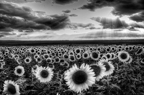 As A Big Picture In My Room Black And White Landscape Black And White Flowers Black And White Photographs