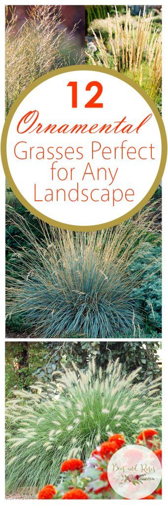 12 Ornamental Grasses Perfect for Any Landscape ~ Bees and Roses