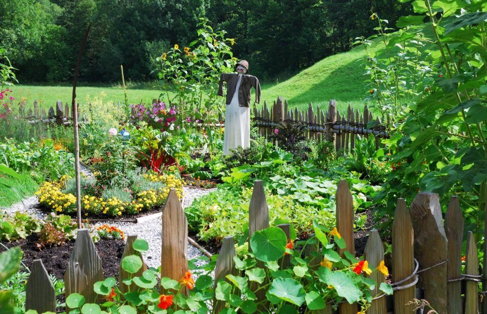 gestaltungsideen für gemüsegärten | gemüsegarten, ernte und kräuter, Garten ideen