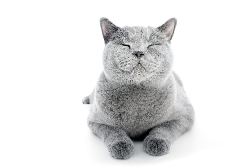 Pin by Nekozushi Pet on sleepy Cat puns, Cat jokes