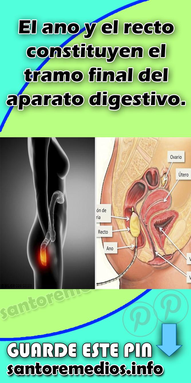 Anatomía del ano y el recto #Ano#Aparato#Digestivo#Salud   Salud ...