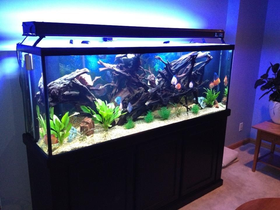 150 discus tank for sale everything included over for First fish tank