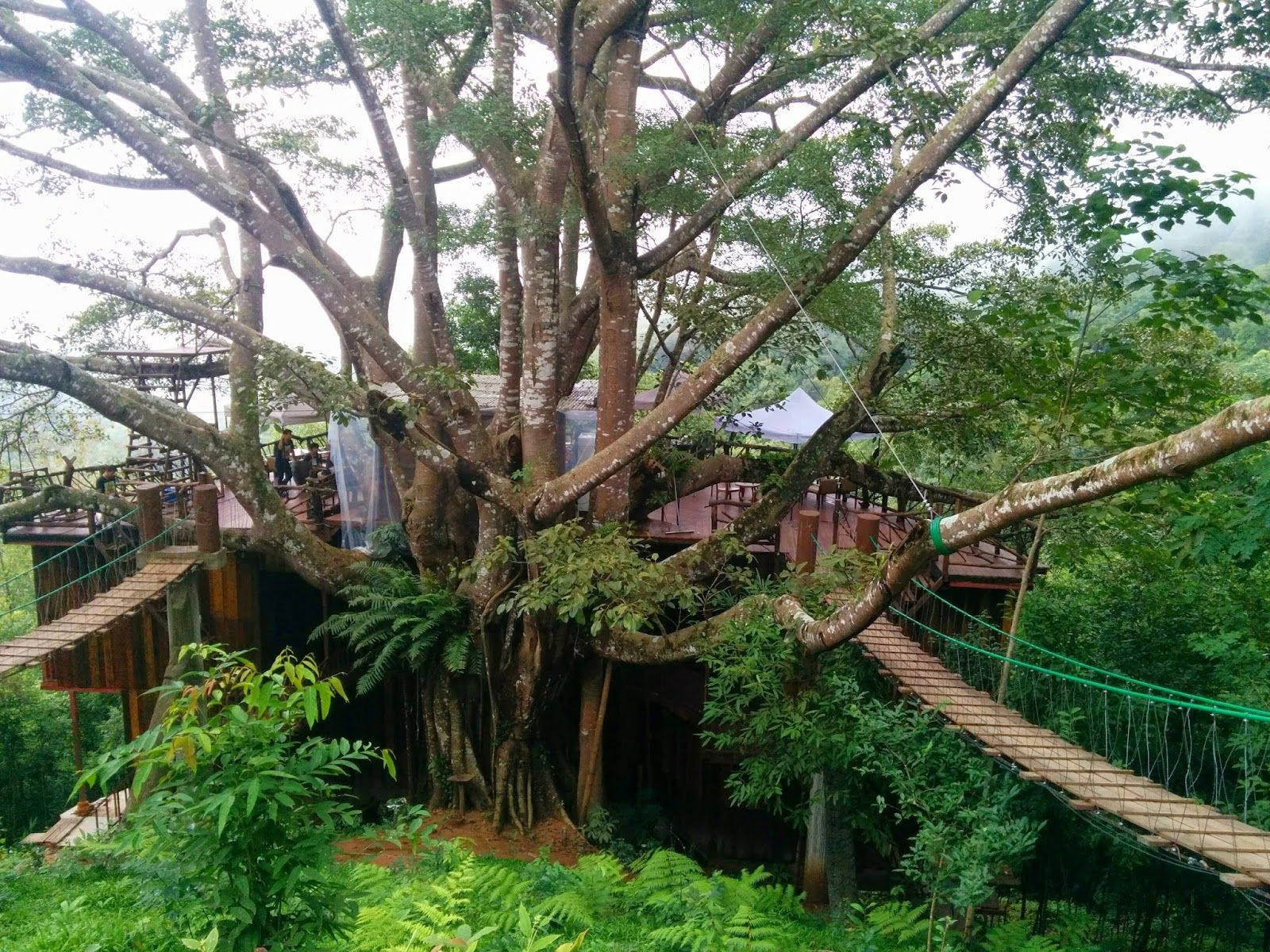 The Giant Homestay And Coffee Shop Tree House Near Chiang