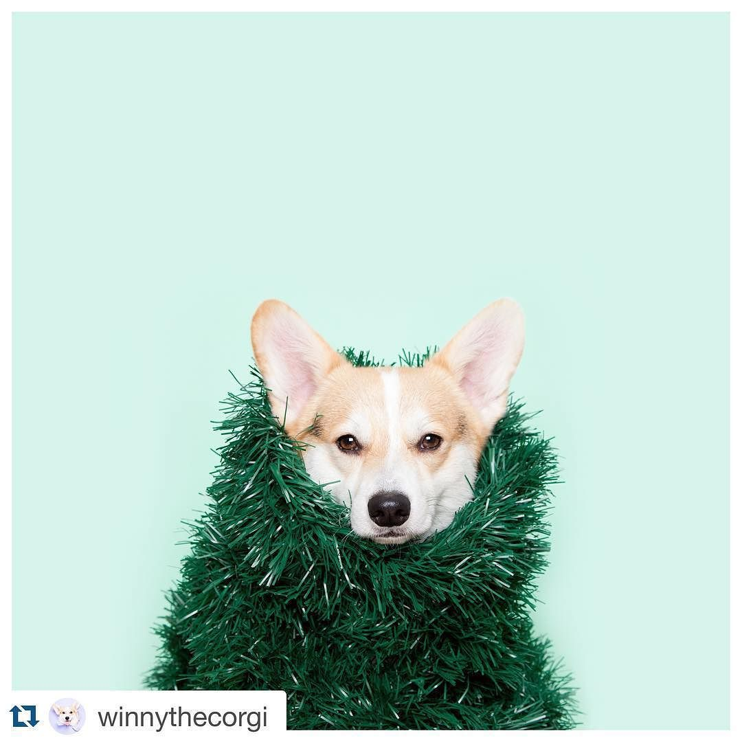 It's officially Christmas time   Love your work Winny!  by thedogtreatcompany