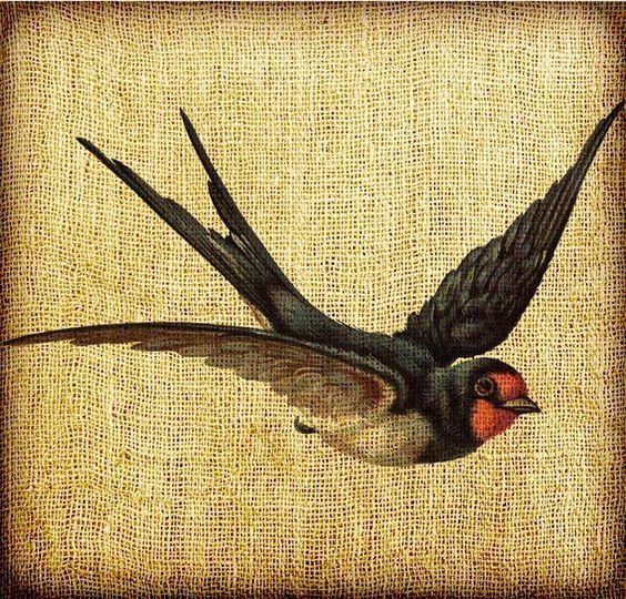 Barn Swallow Flying Art Barn Swallow Swallow Tattoo Barn Swallow Tattoo