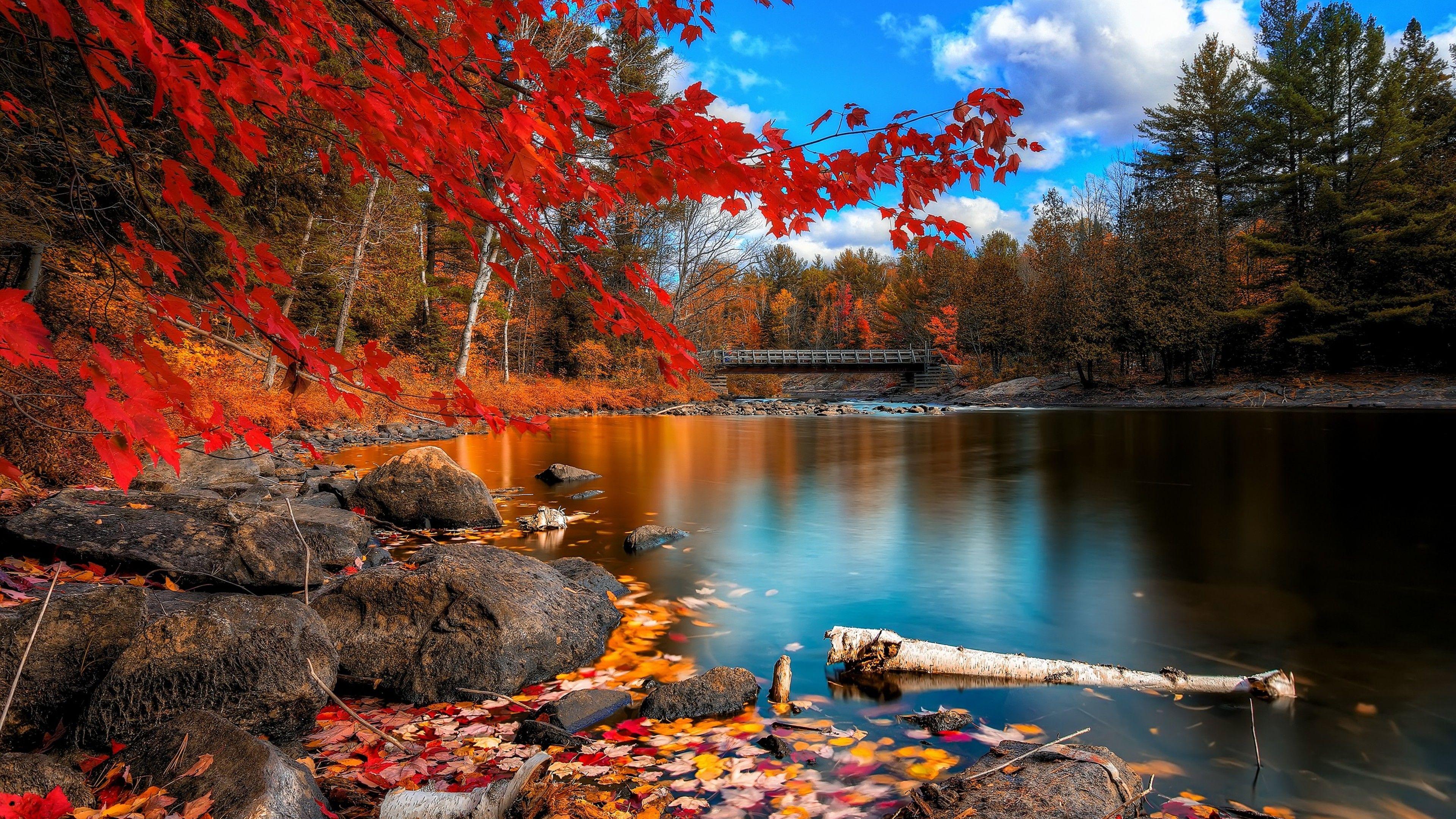 Fall Foliage Desktop Wallpapers Wallpaper Wiki Nature Desktop Autumn Scenery Scenery Wallpaper