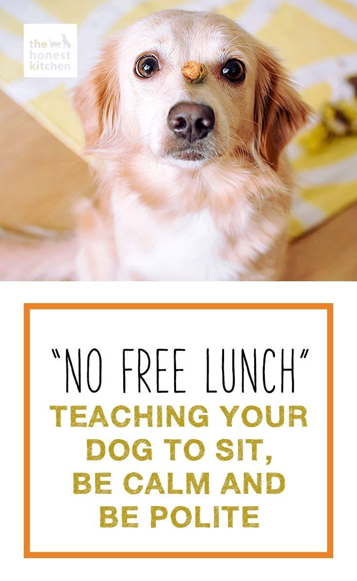 Dog Training For Dummies Click Pic For Many Dog Obedience And