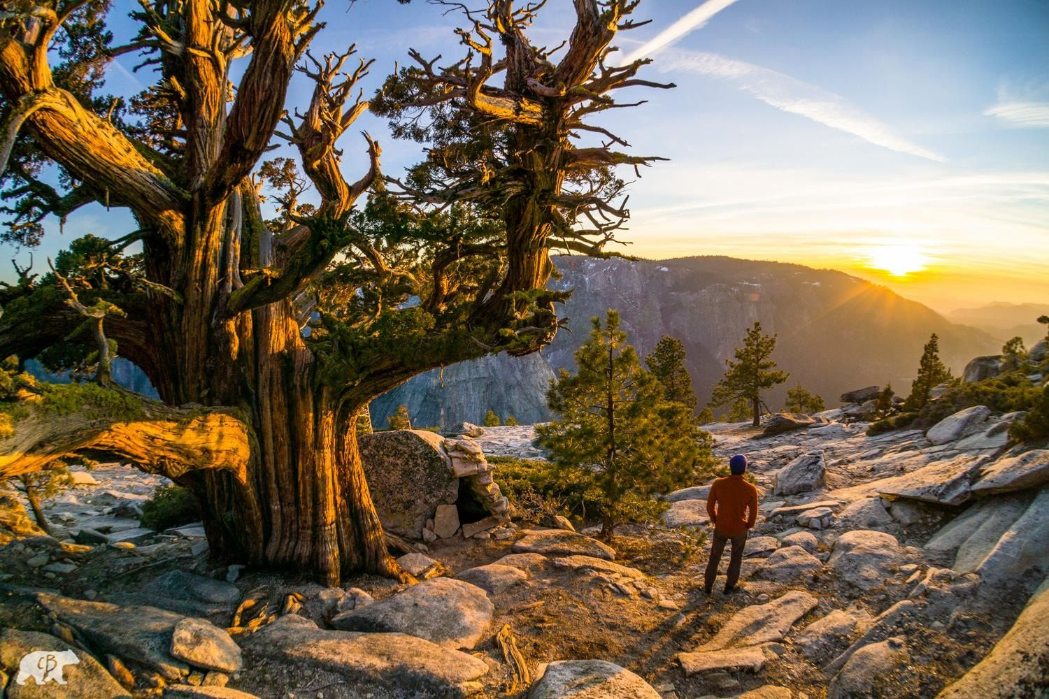 Yosemite Sunrise - Not a bad place to take root.  www.chrisburkard.com