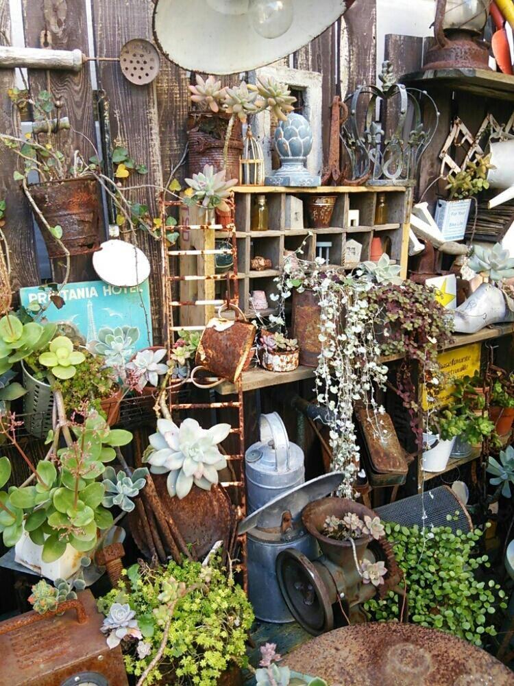 多肉植物の投稿画像 By Astyle O3さん ガーデン雑貨とgardeningと