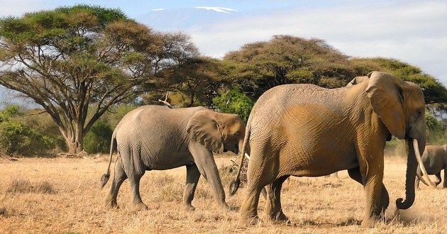 Paws Africa Safaris in East Africa - Tour Package Deals | Luxury Link