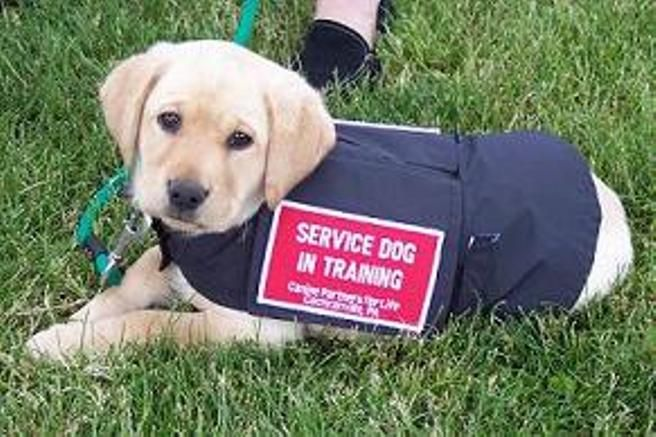 How Can Service Dogs Help Parkinson S Service Dogs Dogs