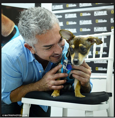 The Damage of the Dog Whisperer: A scientific critique of Cesar Millan's theories and training methods.