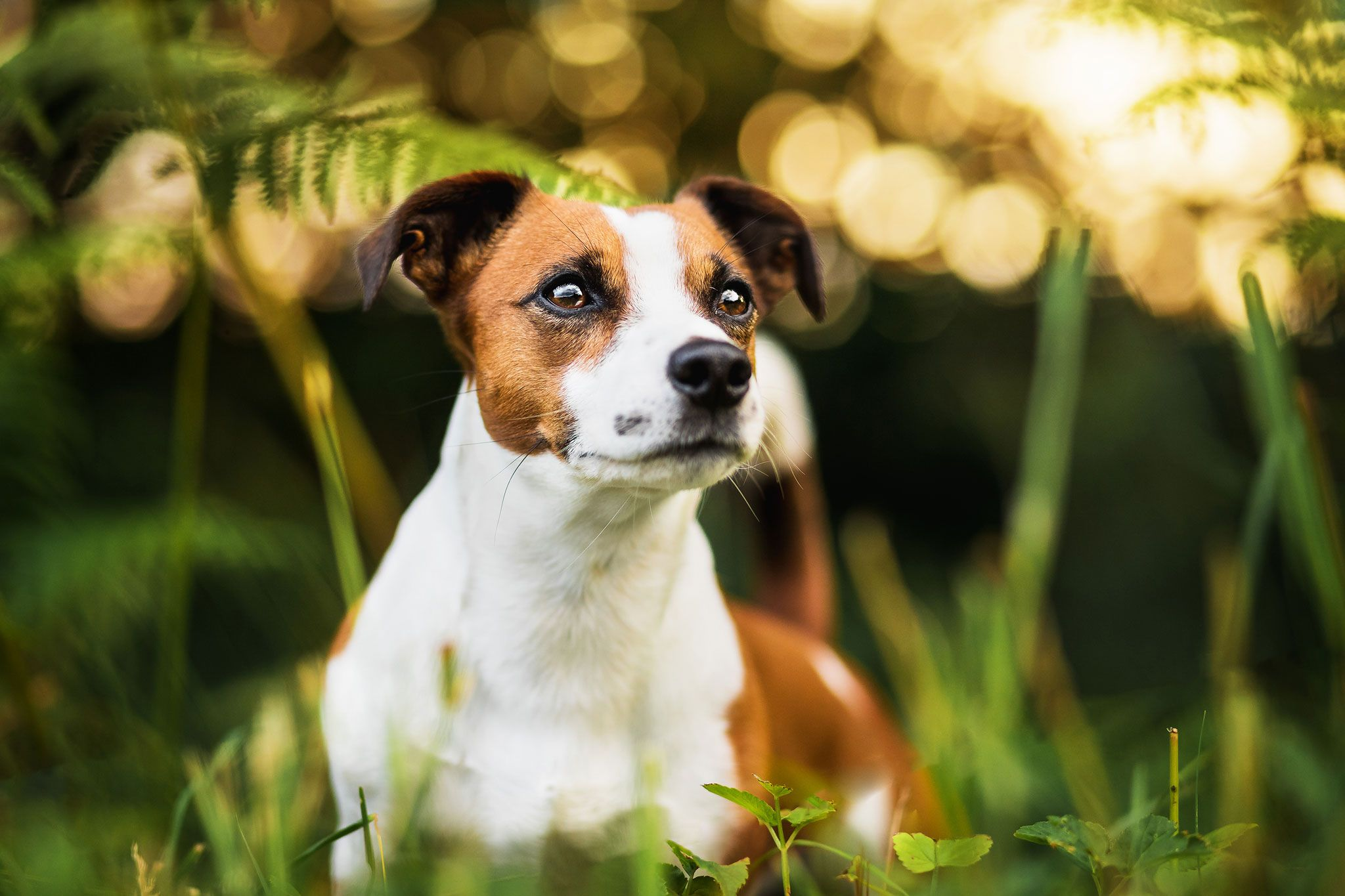 Golden Days Hundefotografin Anna Panke Hundefotografie Tierfotograf Fotografie