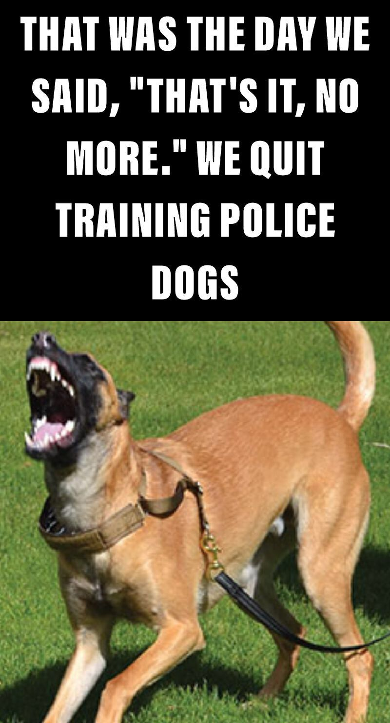 Dogs Training Gone Wrong This Is A Story About A Belgian Malinois