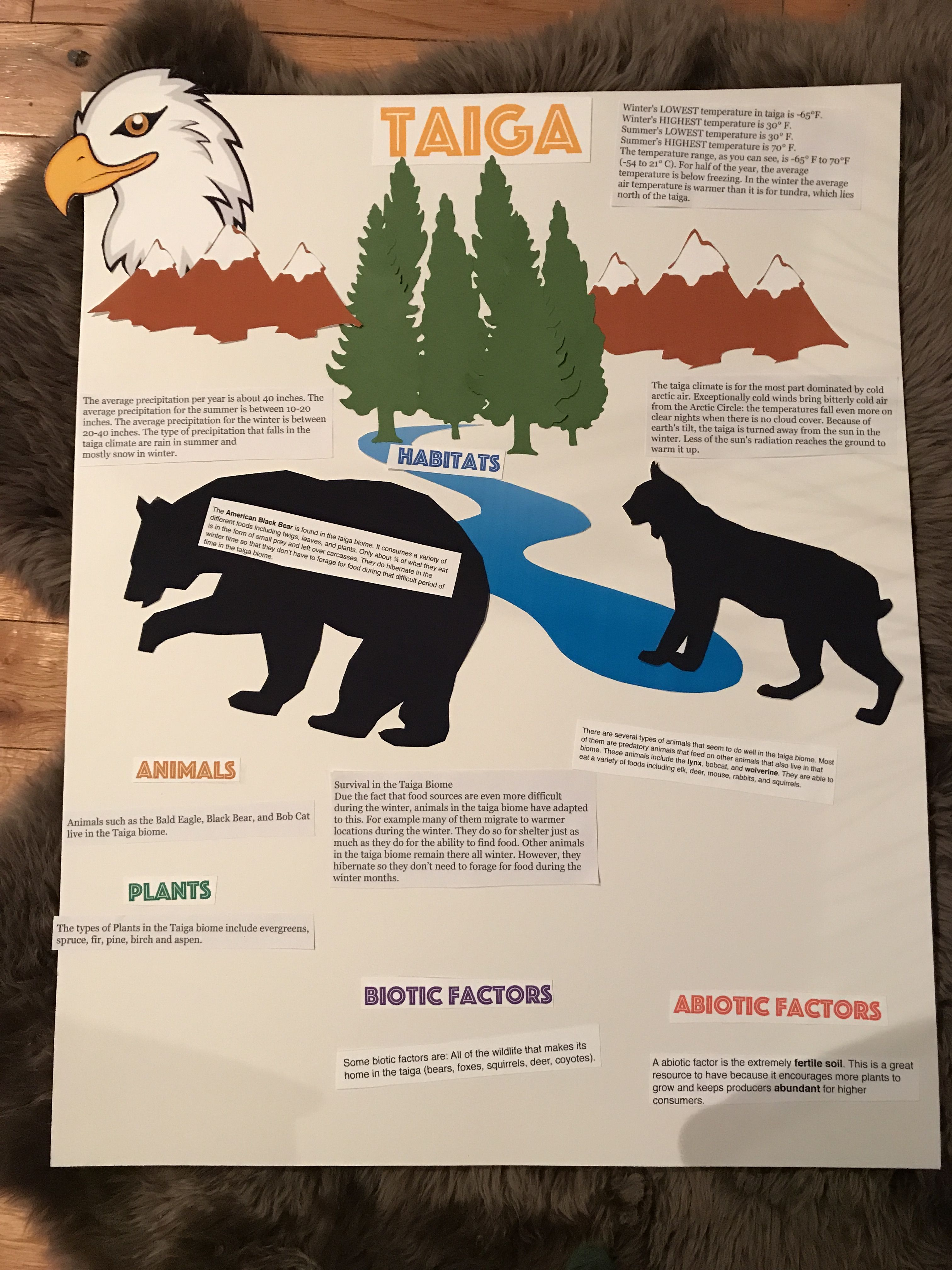 Worksheets On Biomes For 6th Grade   Printable Worksheets and Activities  for Teachers [ 4032 x 3024 Pixel ]