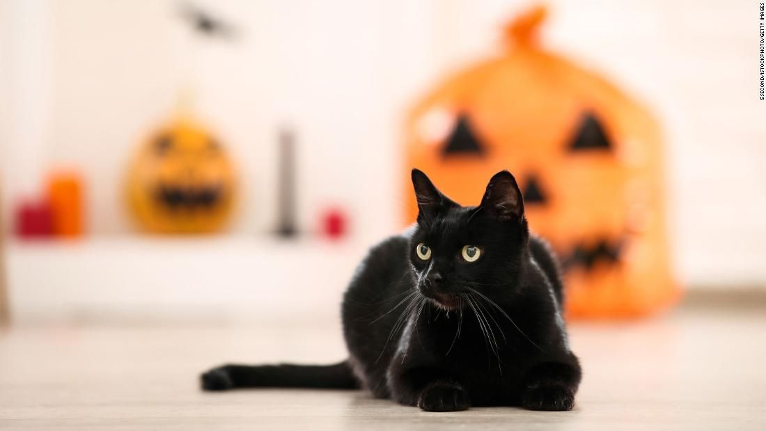 National Black Cat Day Here Are Five Facts To Know About Our Black Feline Friends Cnn Black Cat Day National Black Cat Day Cute Cats And Kittens