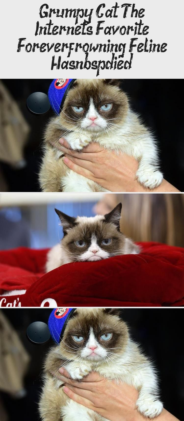 Grumpy Cat The Internet S Favorite Forever Frowning Feline Has Died Cats In 2020 Grumpy Cat Cats Grump Cat