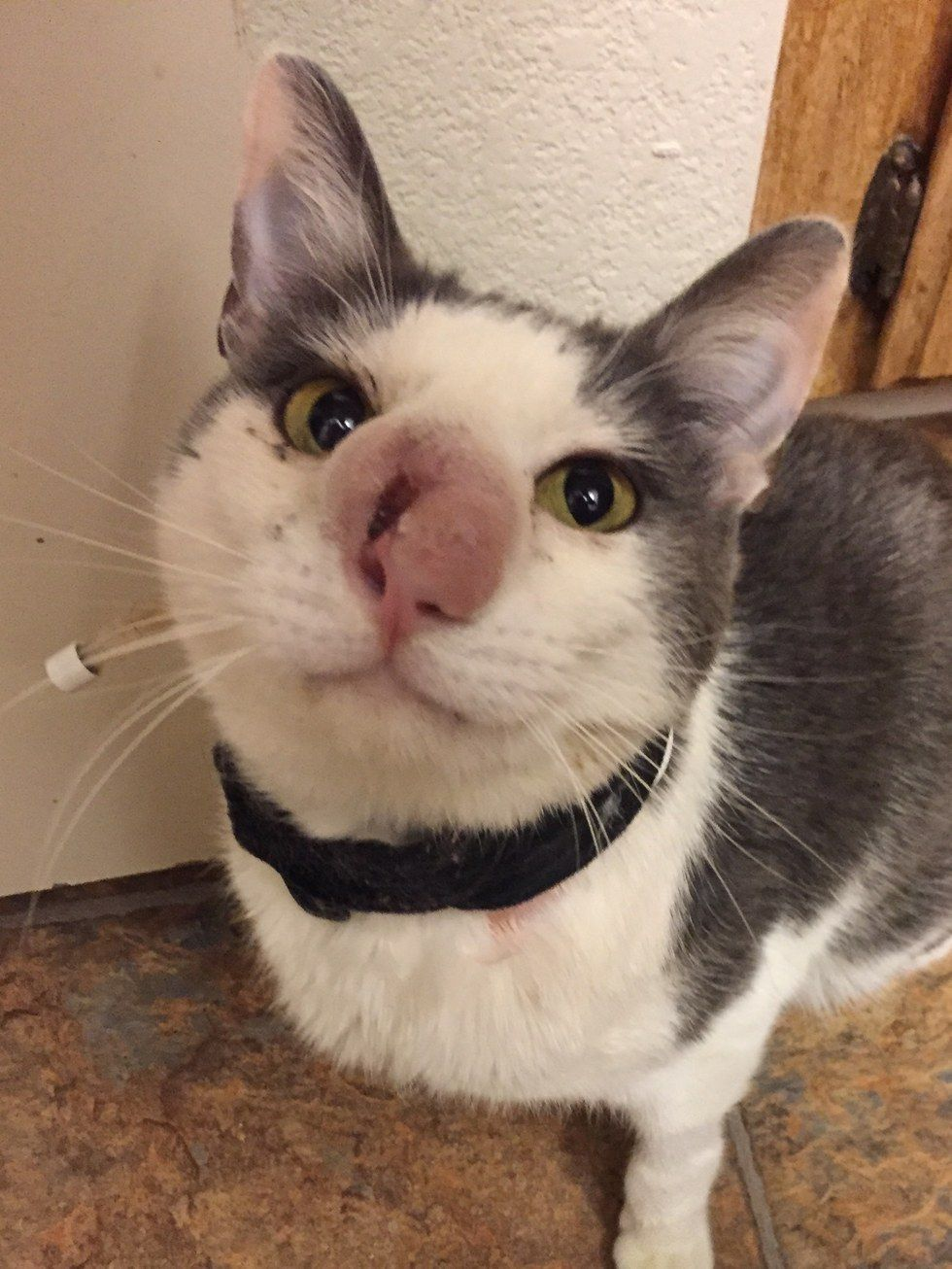 Cat With Terrible Infection Begged For Help But No One