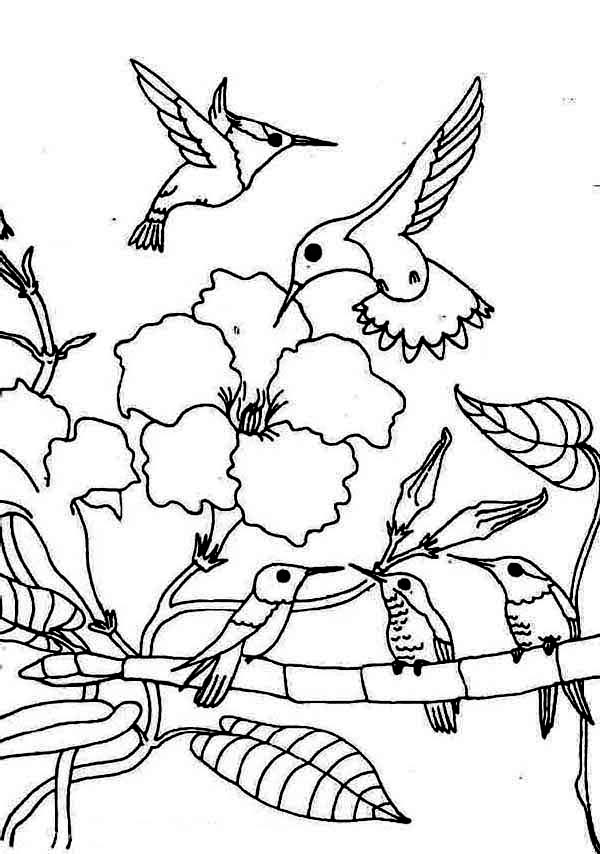 Gathering Season Of Hummingbird Coloring Page Kids Play Color In 2020 Camping Coloring Pages Animal Coloring Pages Coloring Pages