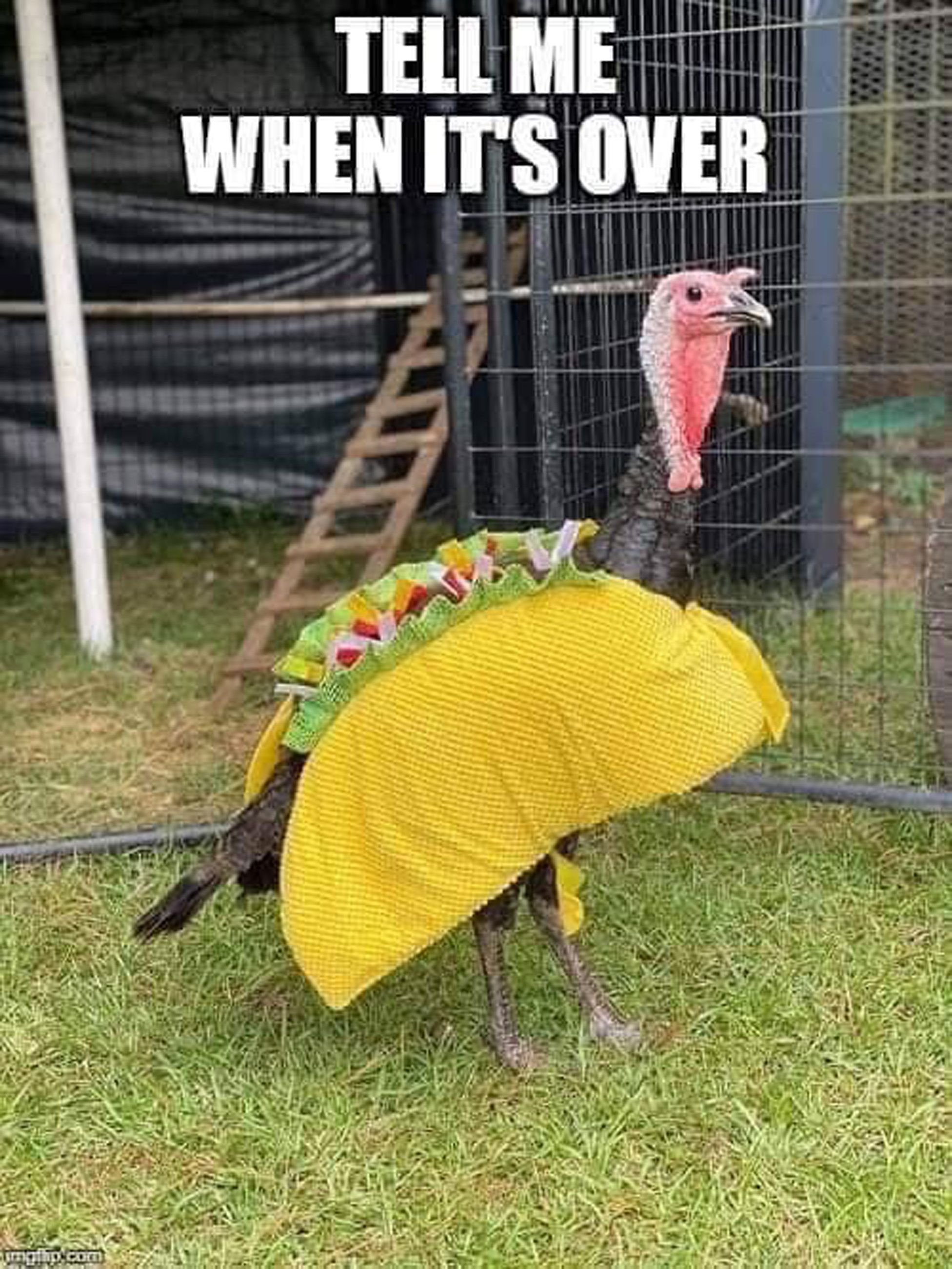 Thanksgiving Humor Funny Thanksgiving Clean Memes What Do You Meme