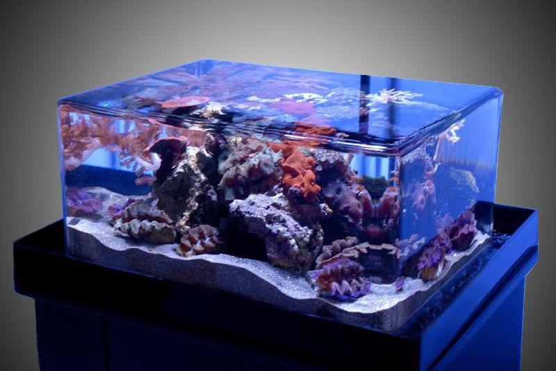 This Classic Zeroedge 22zr Aquarium System Is The Smallest Of Our Classic Overflowing Aquarium Series With The Same Rimless Aquarium Aquarium Systems Fish Tank