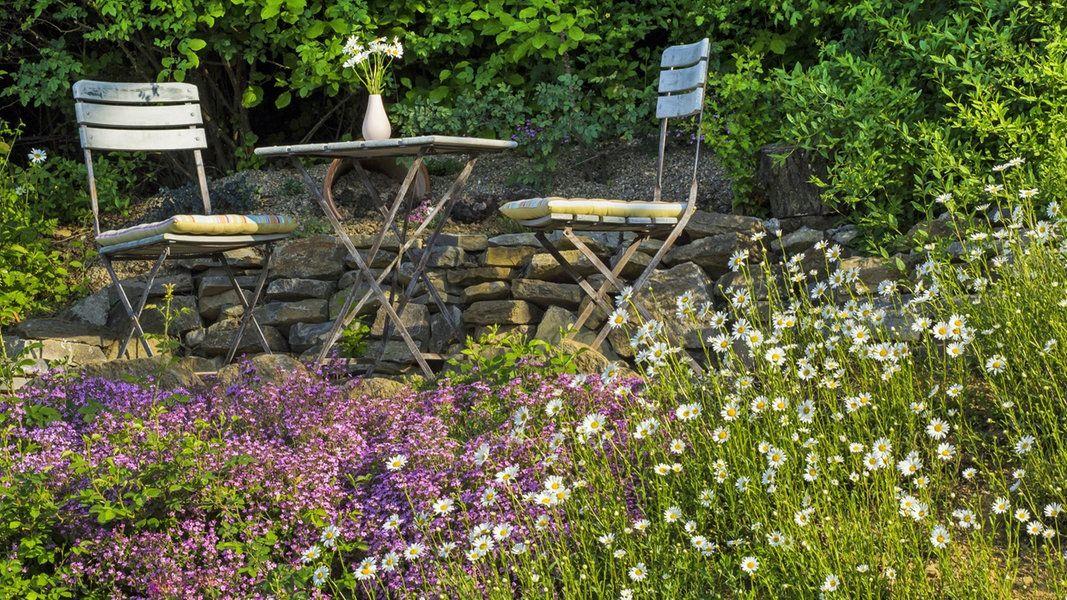 Pflegeleichter Garten Mit Den Richtigen Pflanzen Pflegeleichter Garten Naturnaher Garten Garten