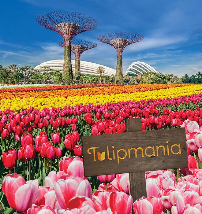Garden By The Bay Flower Show gardensthe bay singapore -. tulipmania! inspiredmadurodam